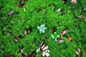 Green moss backgound — Stock Photo