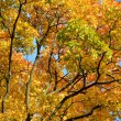 Autumn branch of maple tree — Stock Photo