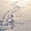 Footsteps on the snow — Stock Photo