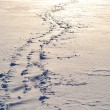 Stock Photo: Footsteps on the snow