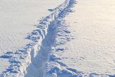 Ślady na śniegu — Zdjęcie stockowe