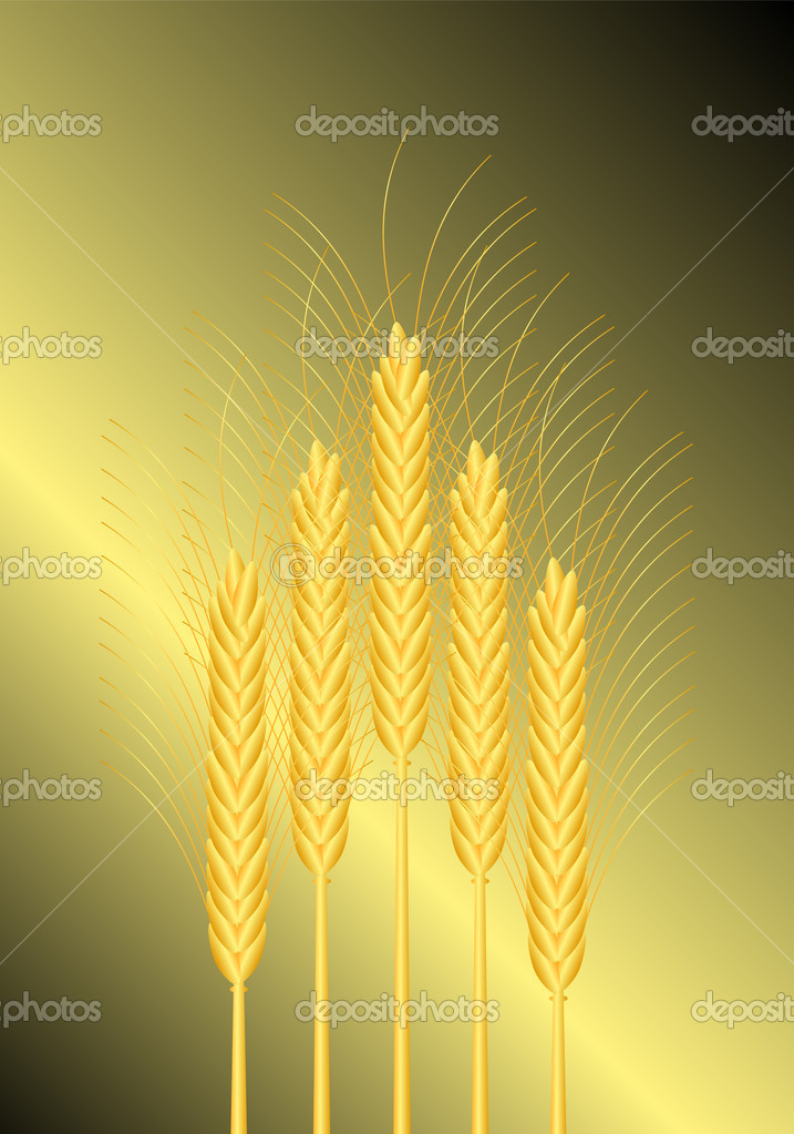 Background with wheat - vector illustration . — Stock Vector #7241608
