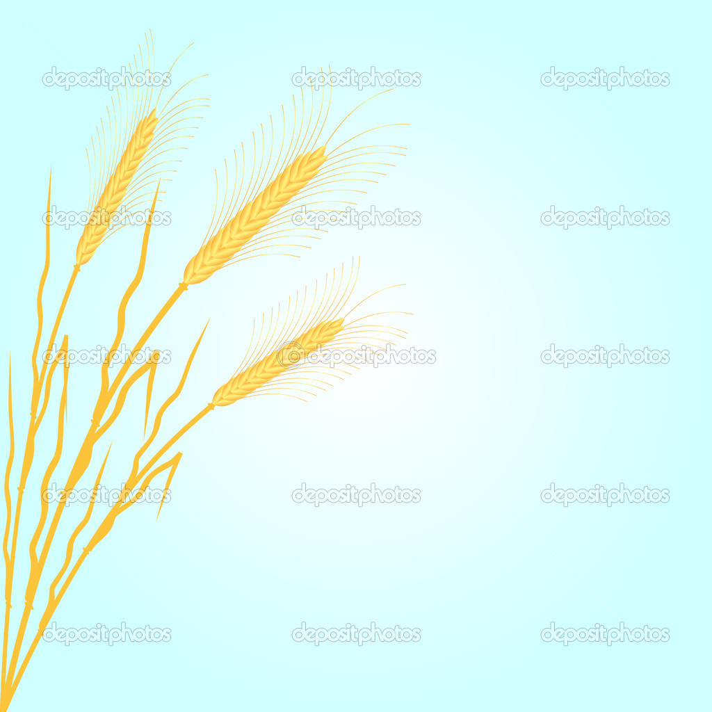 Background with wheat - vector illustration . — Stock Vector #7241618