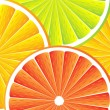 Citrus fruit background - vector — Stock Vector #7412824