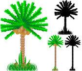 Set of various palms — Stock Vector