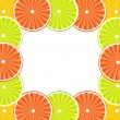 Citrus fruit background - vector — Stock Vector #7497920