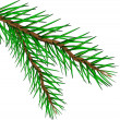 Stock Vector: Fir tree branch