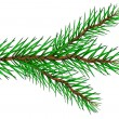 Fir tree branch — Stockvectorbeeld