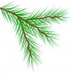 Fir tree branch — Stock Vector