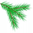 Fir tree branch — Stok Vektör
