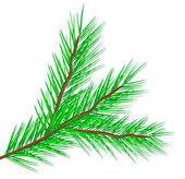 Rama de árbol de abeto — Vector de stock