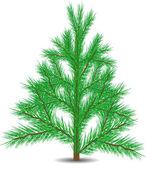 árbol de la piel — Vector de stock