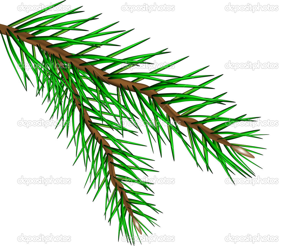 Vector fir tree branch isolated on a white background — Stock Vector #7507296