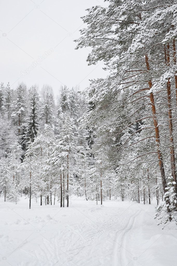 Winter landscape with snow covered pine trees and ski run — Stock Photo #7788278