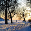 Winter park at sunset — Stock Photo #7809669