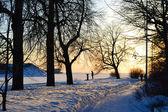 Winter park at sunset — Stock Photo