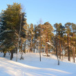 Winter landscape — Stock Photo #7887864