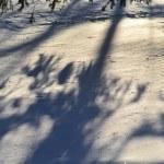 The photo of fresh snow — Stock Photo #7916676