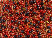 Redcurrant and bilberry — Stock Photo