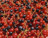 Redcurrant and bilberry — Foto de Stock
