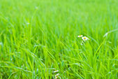 Background of grass — Stockfoto