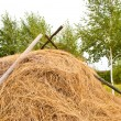 Haystack — Stock Photo #7364522