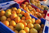 Oranges and tangerines — Stock Photo