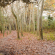 Deciduous woodlands — Stockfoto #7684467