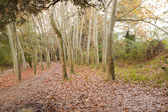 Deciduous woodlands — Stock Photo