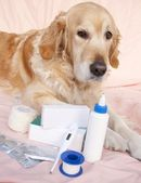 Dog medicine — Stock Photo