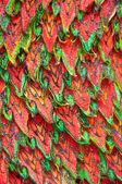 Thai art texture — Stock Photo