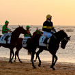 Horse race on Sanlucar of Barrameda, Spain, August 2011 — Stock Photo #7286393