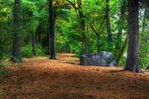 Colori del bosco in autunno — Foto Stock