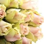 Romantic roses — Stock Photo
