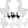 Geese. Wild. Waterfowl, domestic animals. An illustration. — Stock Vector