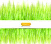 Vektör yeşil yaz çimen arka plan — Stok Vektör