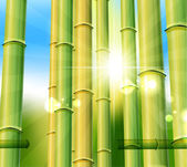 Bamboo nature background — Stock Vector
