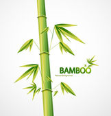 Bamboo stem abstract nature background — Stock Vector