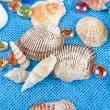 Shell — Stock Photo #6820214
