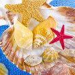 Sea shell — Stock Photo #6839716