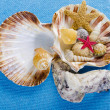 Different mussel collection on blue background — Stock Photo #6839947