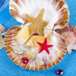 Sea shell — Stock Photo #6840416