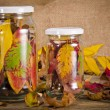 Preserved autumn — Stock fotografie