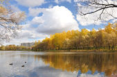A pond in a city park. — Stock Photo