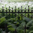 Stock Photo: Fence overgrown with grass