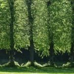 Green path — Stock Photo #7643716