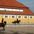 Danish horse farm — Stock Photo