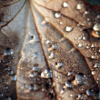 Wet leaf — Stock Photo