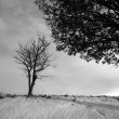 Lonely tree — Stock Photo #7645088