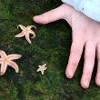 Starfish — Stockfoto